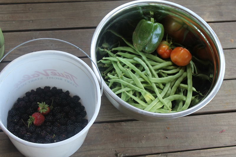 todays first pickins