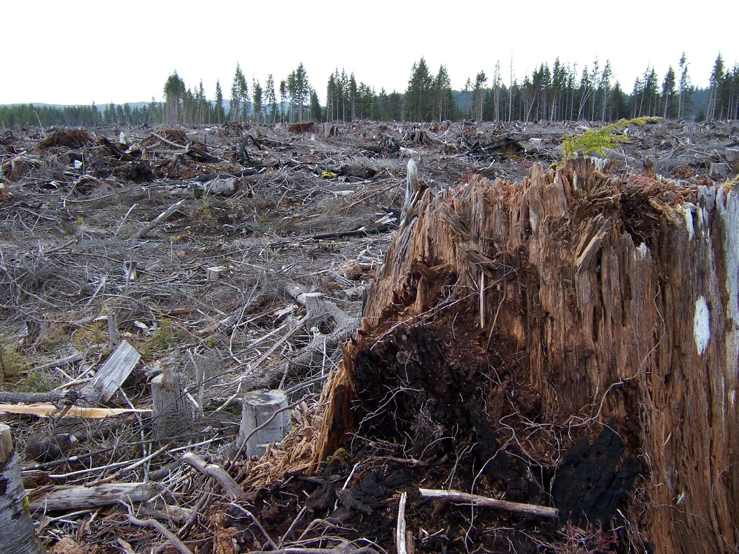 protect forest essay