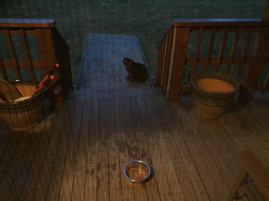 Finally, Tramp arrives after Mr. Skunk departs to stand point while Gray Kitty finishes his food.