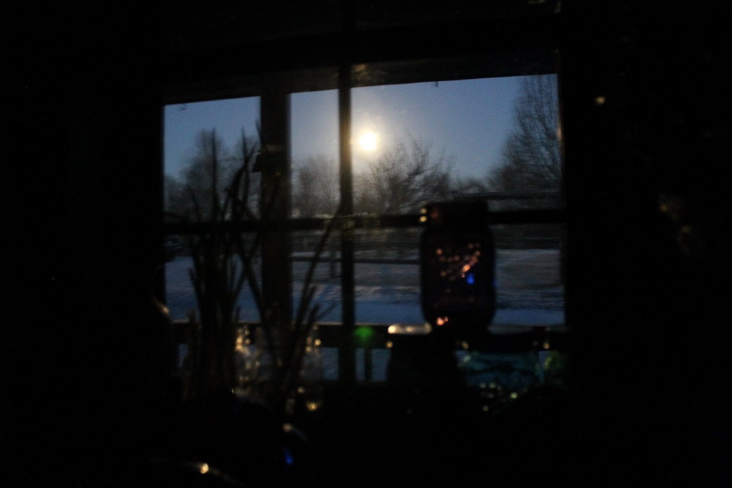 By the bright light of the March 5th full moon, my scallions are regrowing in the kitchen window.