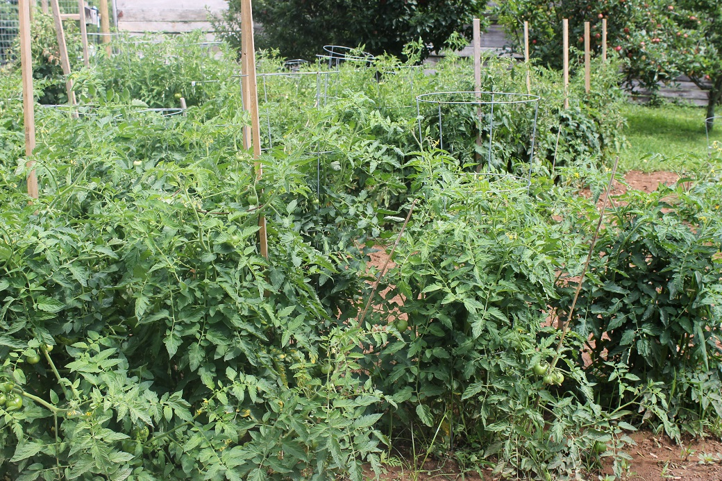 The tomatoes and peppers thrived last year with periodic doses of coffee grounds.