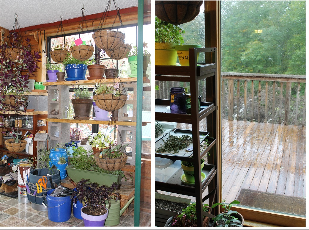 A few of the windows where plants will spend the winter months.
