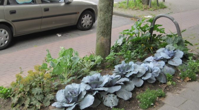 Gardening More Meaningful than Voting in a Rigged Political System