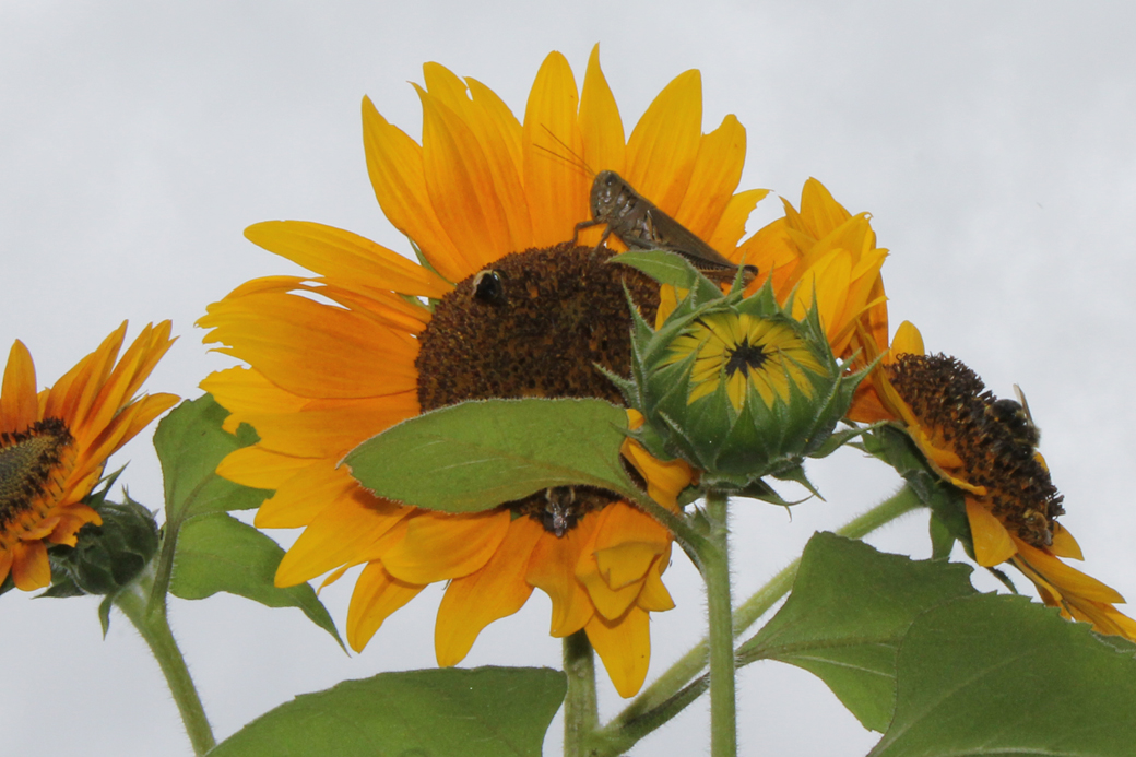 the dilemma in the sunflower by simon wiesenthal The sunflower essay writing service,  the sunflower is a book written by simon wiesenthal that reconstructs his moves to an individual question of forgiveness  the wiesenthal's dilemma has currently 53 responses.