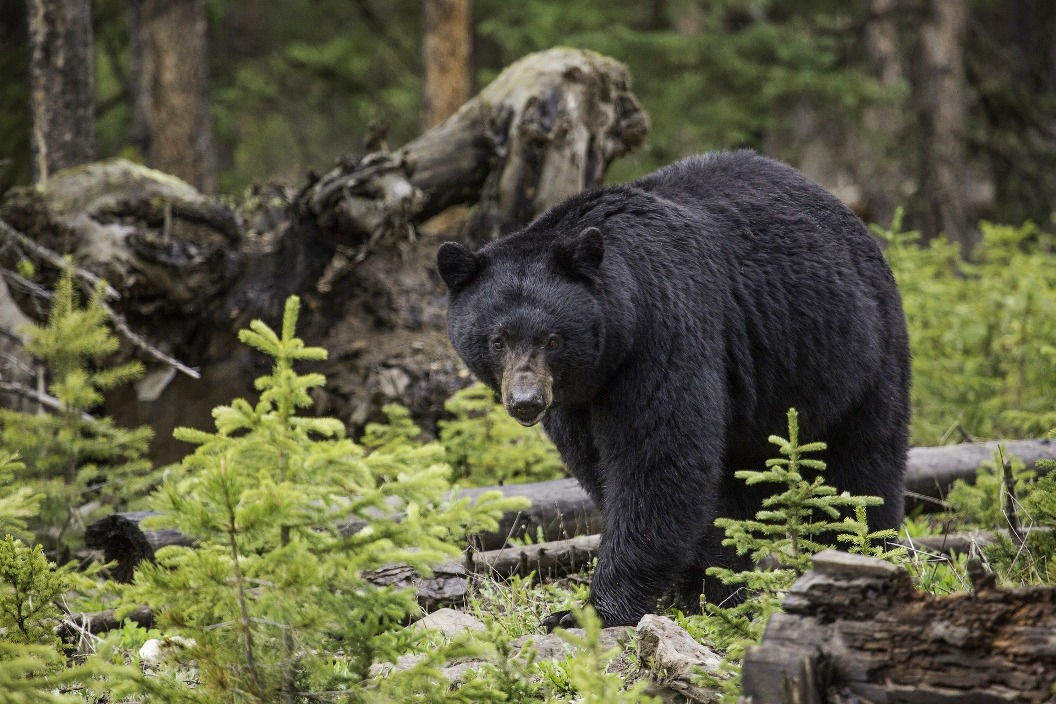Black Bear - Have you a positive personal practice?