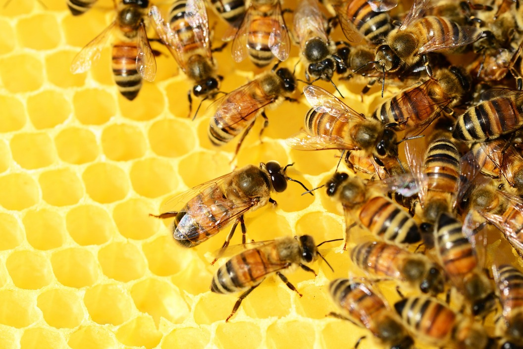 Hive Mind - Have you a positive personal practice?